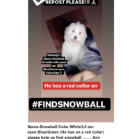 My Dog SNOWBALL IS MISSING